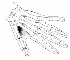 drawing hands Carol McIntyre