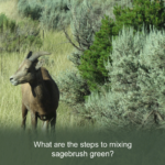 The 4 Steps to Mixing Sage Green of the Southwest?